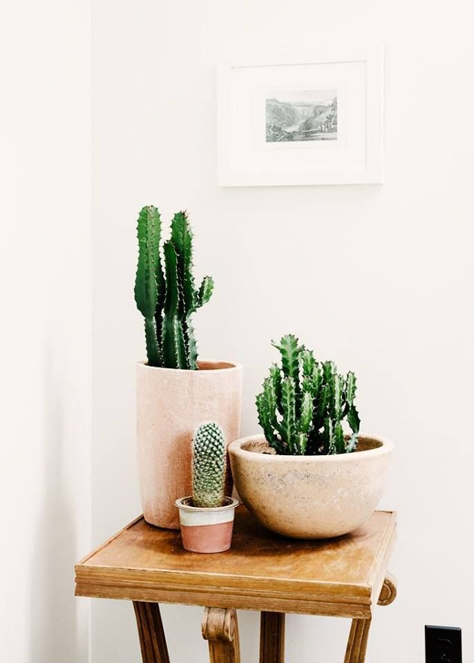 classy pictures of cactus house plants. 71 Classy Cactus Interior Decor to Give Your Rooms a Makeover