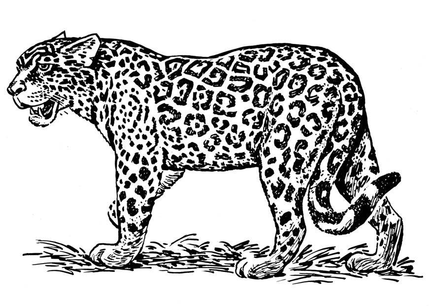 jaguar coloring page - Google Search | Africa | Pinterest | Jaguar ...