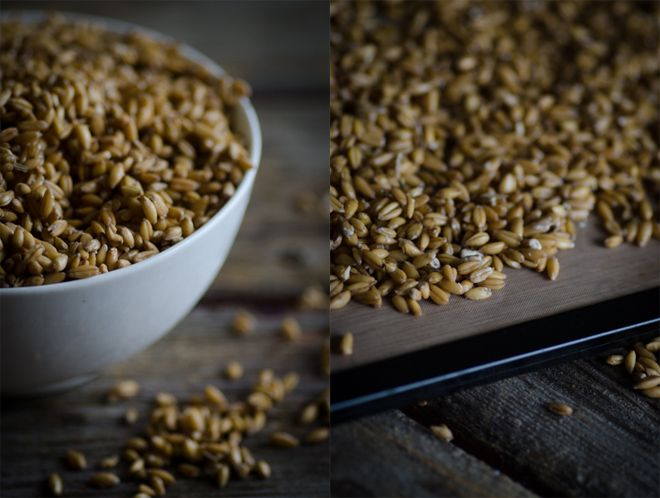 How to make sprouted grain flour and sprout your own grains #healthycooking