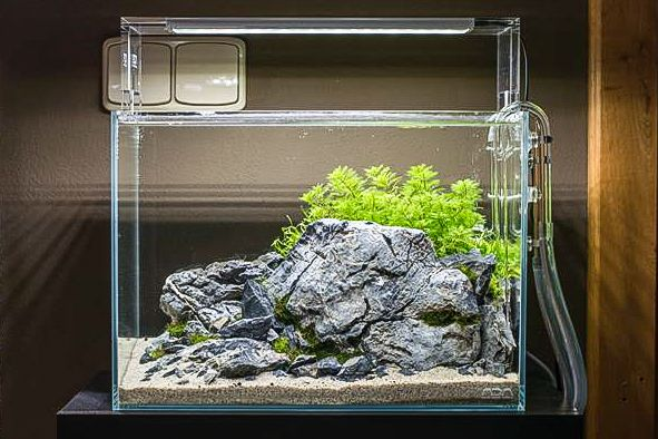 A rocky aquascape by Voloduson — ADA M, with Aquasky 361 ...