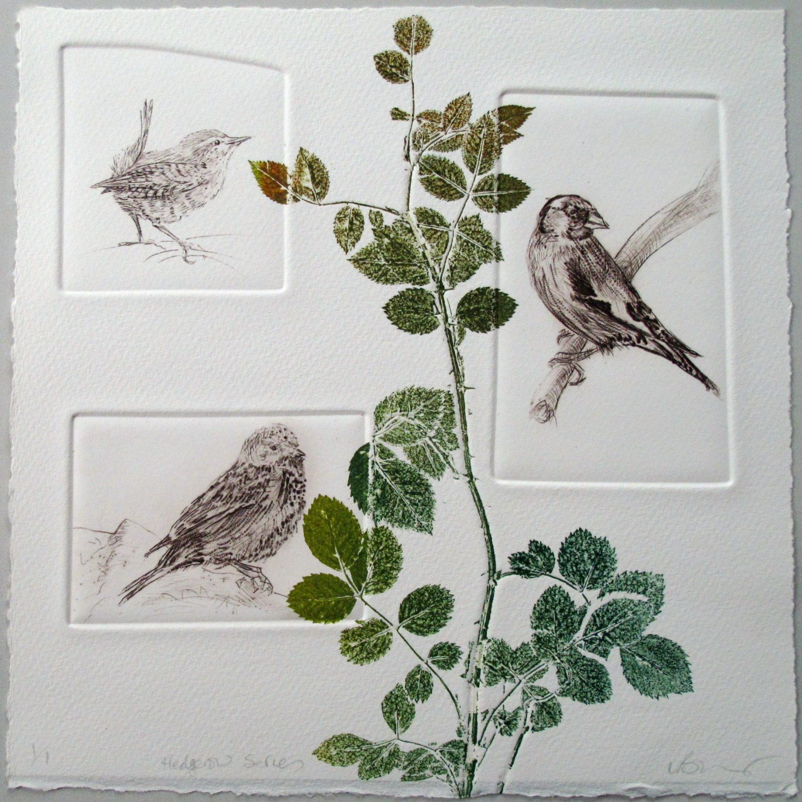 Limited Edition Bird print Drypoint Linnet