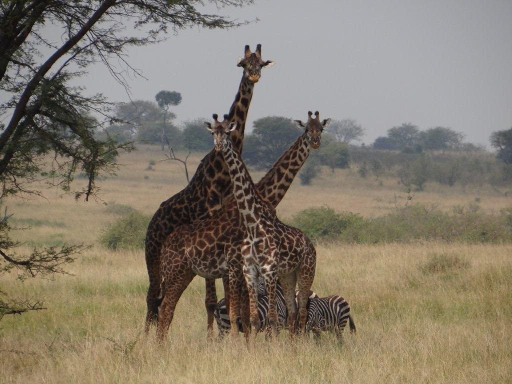 Photo shot by ADS Guests - The Heimke Family from Anchorage, Alaska on their safari trip from July 7-17, 2012