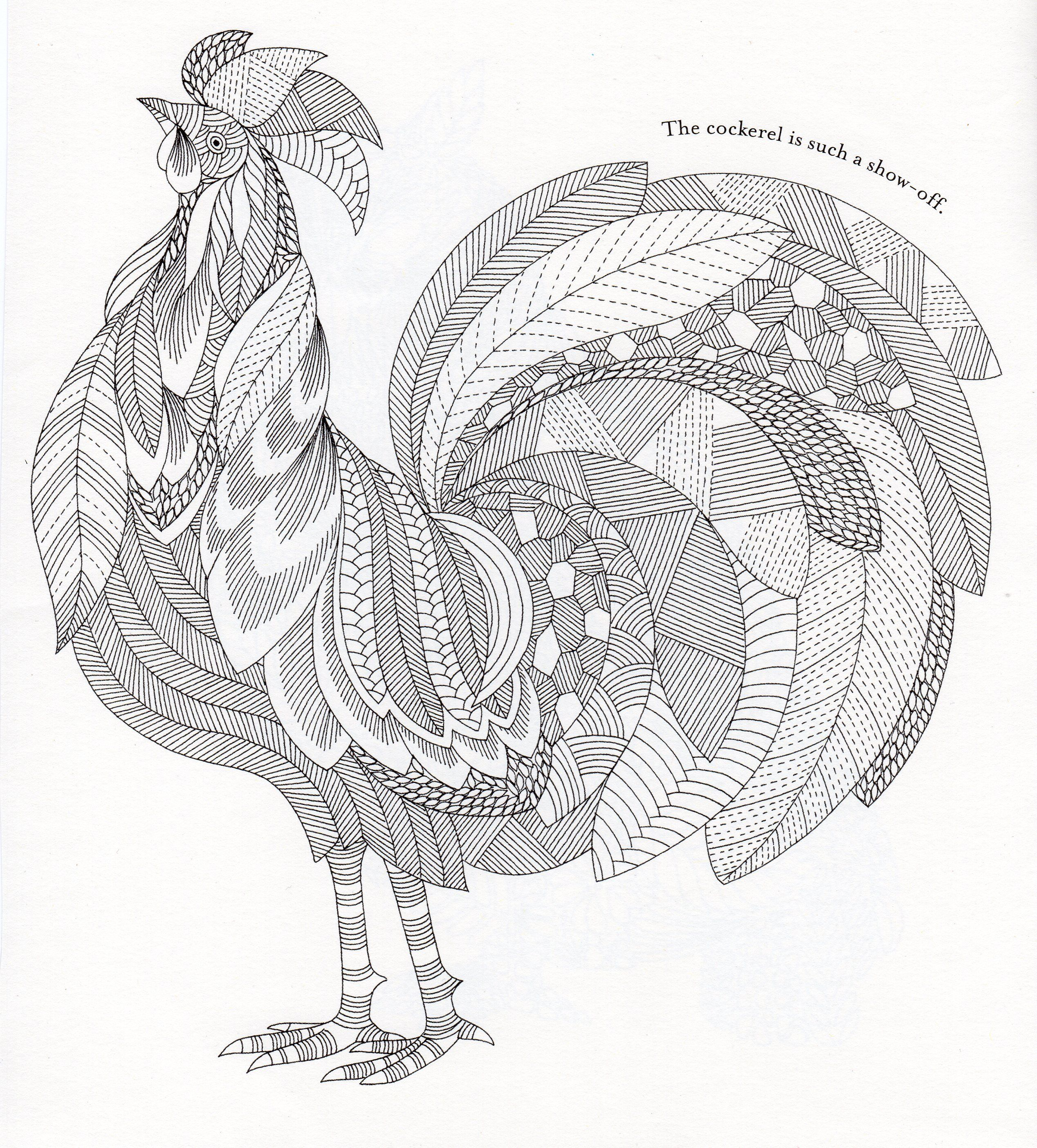 Millie Marotta S Animal Kingdom Rooster Adult Coloring Pages