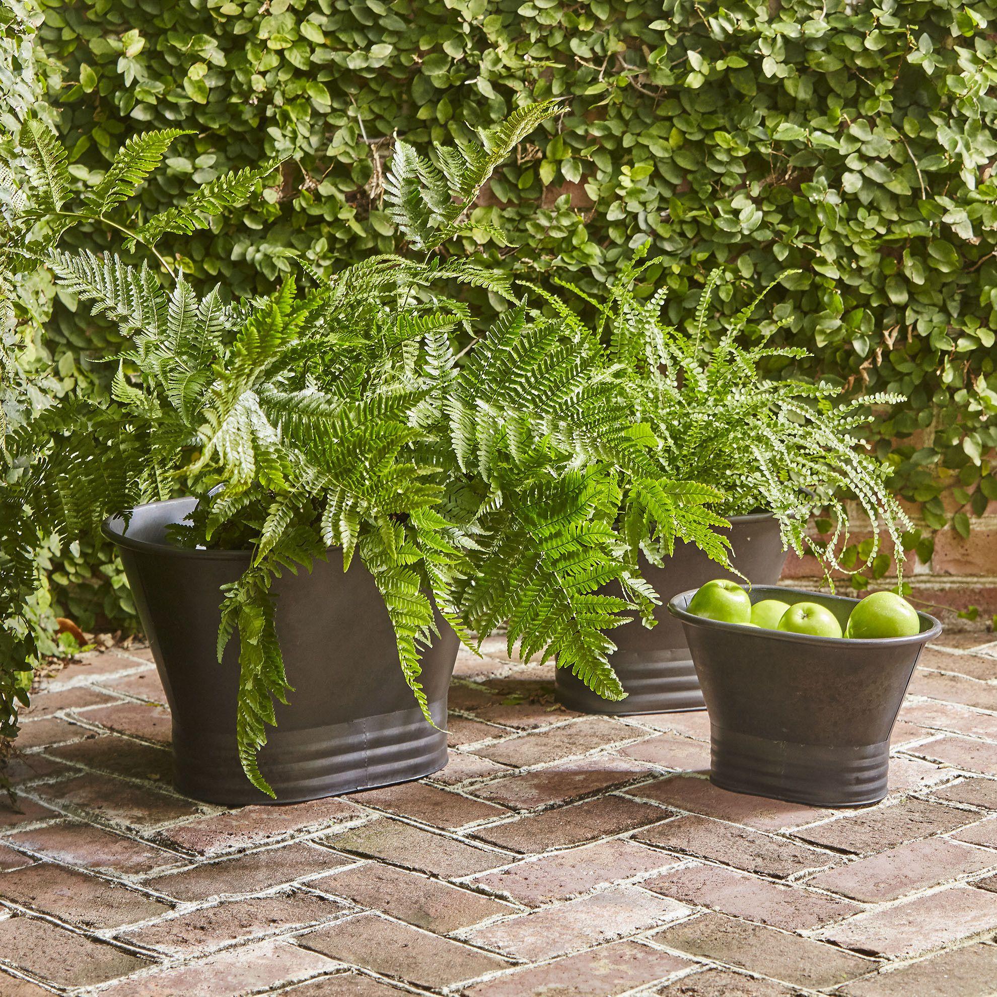 Englewood Planters