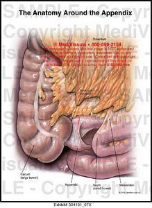 Medivisuals The Anatomy Around the Appendix Medical ...