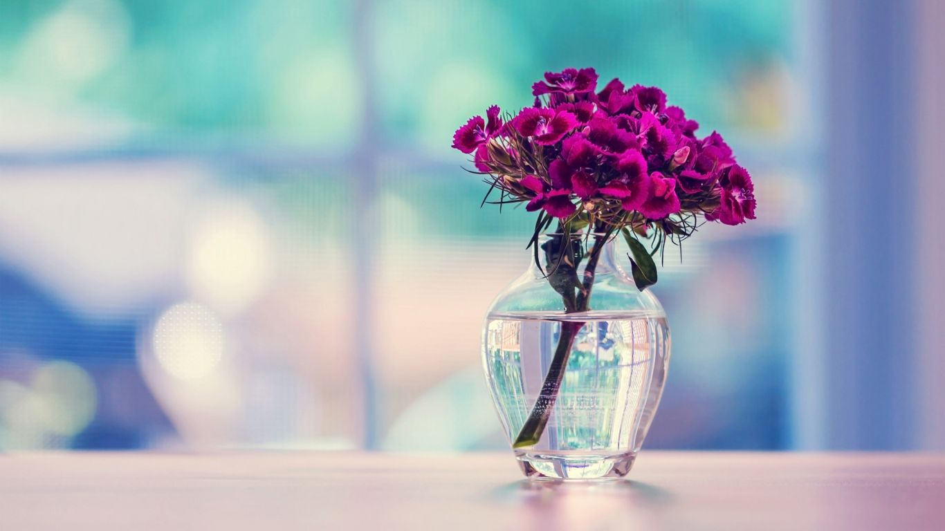 Purple Flower In A Vase Hd Desktop Wallpaper 1366x768 Jpg 1366 768 Purple Background Images Beautiful Wallpaper Pictures Beautiful Wallpaper Hd