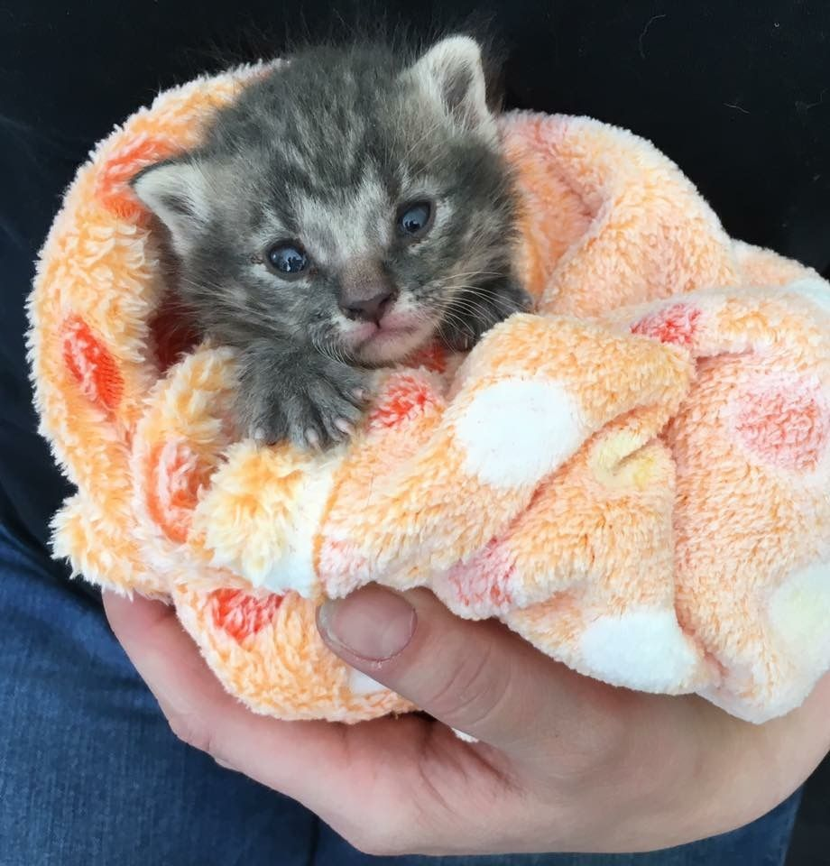 10 Crucial Steps To Take To Save An Abandoned Newborn Kitten