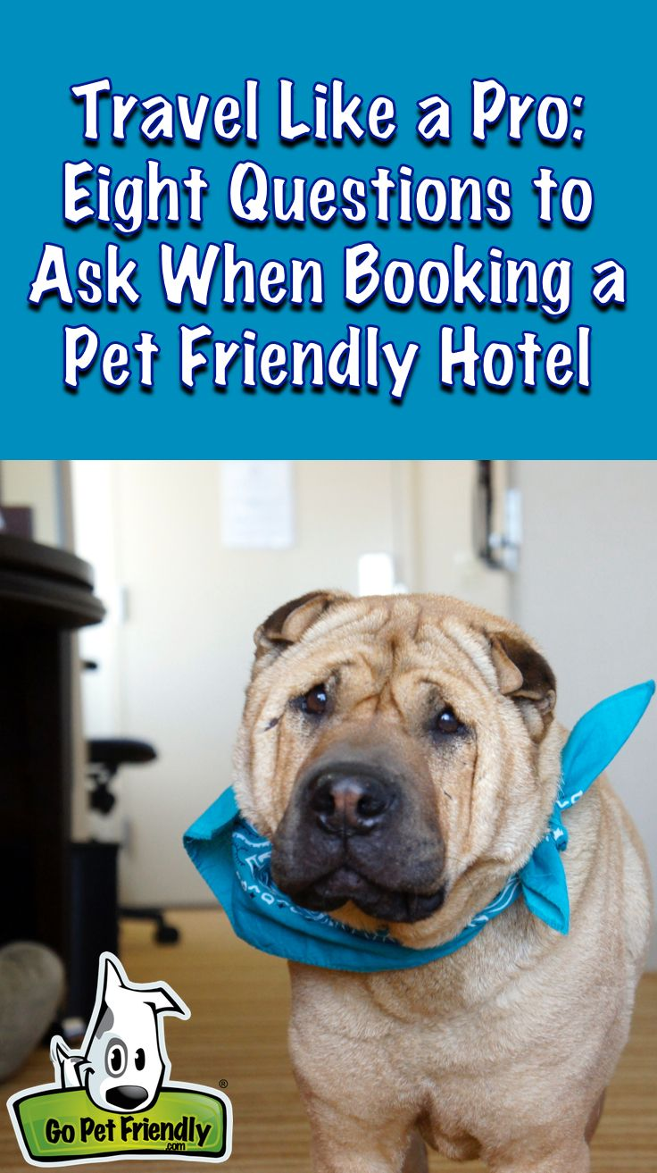 Travel Like A Pro 8 Questions To Ask When Booking A Pet Friendly Hotel Pet Friendly Hotels Dog Friendly Hotels Pets