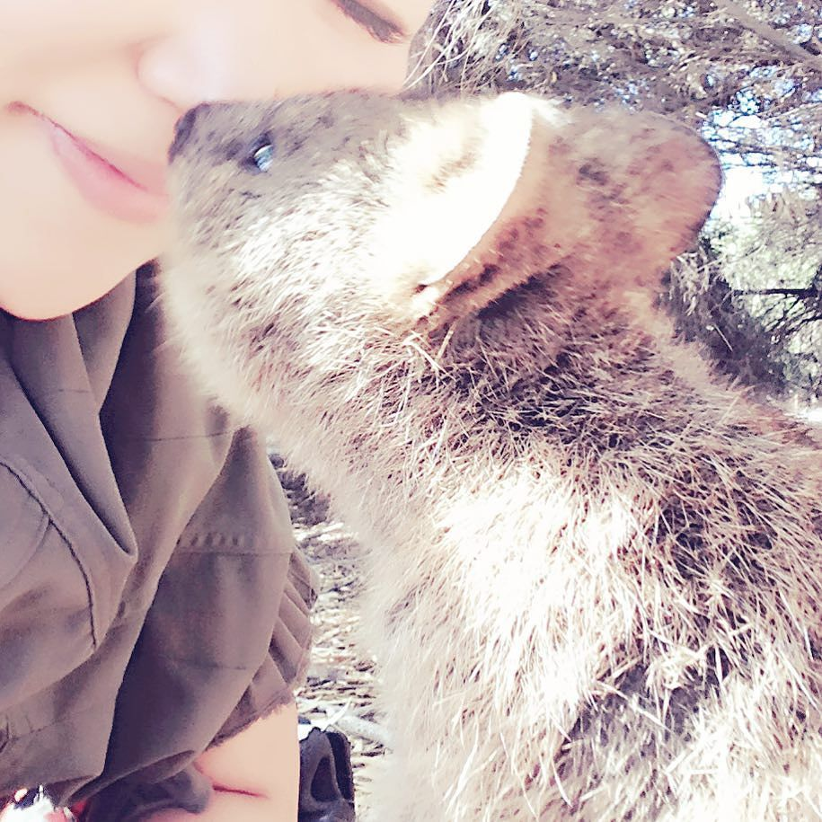 Kiss meeeeeeeeerrクオッカ可愛すぎ#rottnestisland#quokka#kiss#kissme#ロットネス島 #クオッカ#cute#可愛すぎ#そうだったワーホリでした #workingholiday by sakihoneys http://ift.tt/1L5GqLp