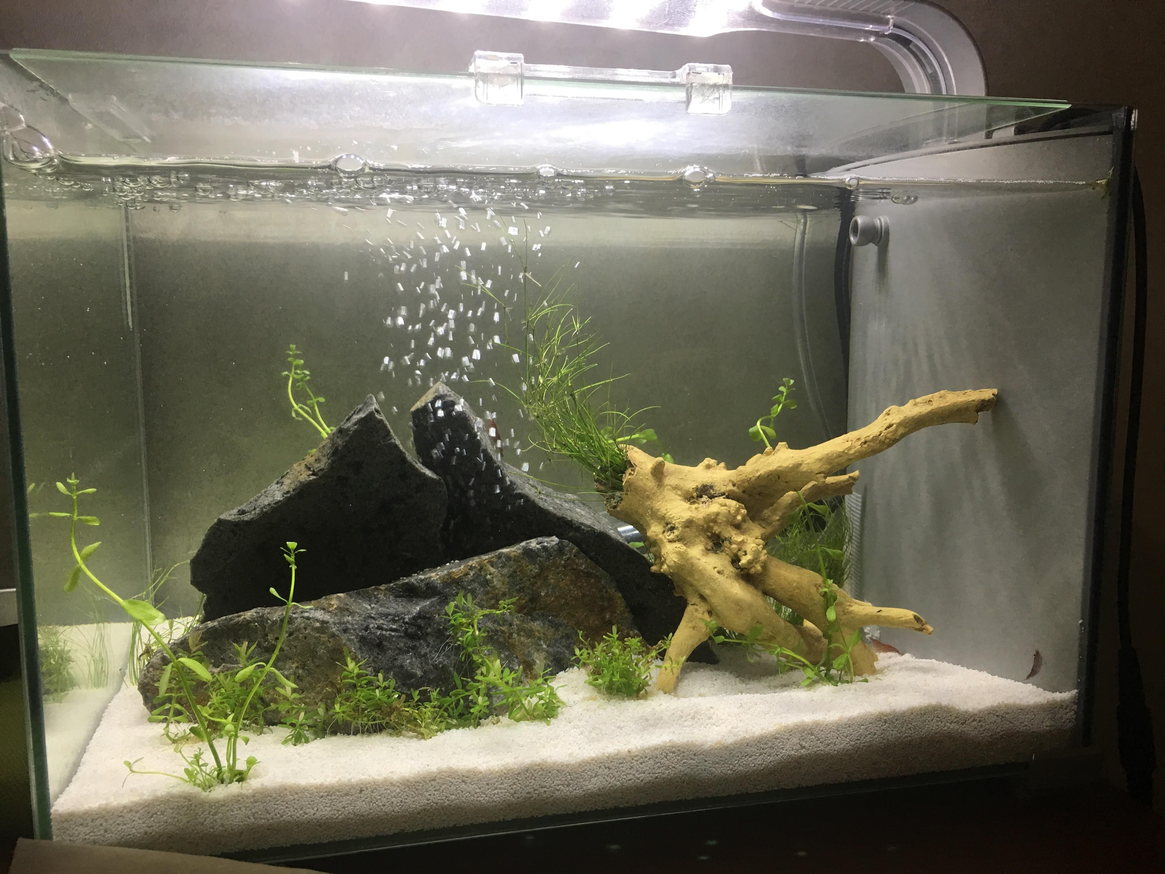 Is this too much rock for 5 gallon Ph keeps rising over 8 0