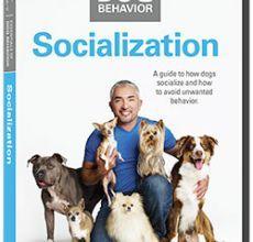 Products Cesar S Way Essentials Of Dog Behavior Socialization