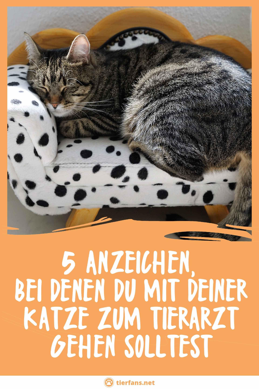 5 Anzeichen Bei Denen Du Mit Deiner Katze Zum Tierarzt Gehen