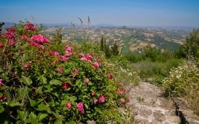 Italia, escalera, Flores, campo