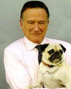 Most Popular Cute Small Dog Breeds Pugs Dogs 101 Celebrity Dogs