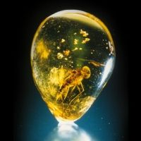 Amber information from AGTA