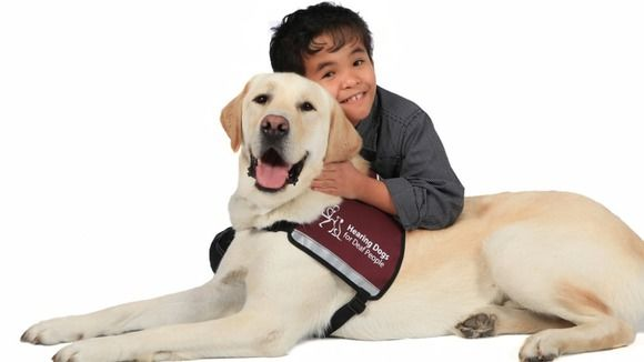 Deaf Awareness Week Service Dogs Dogs Work With Animals