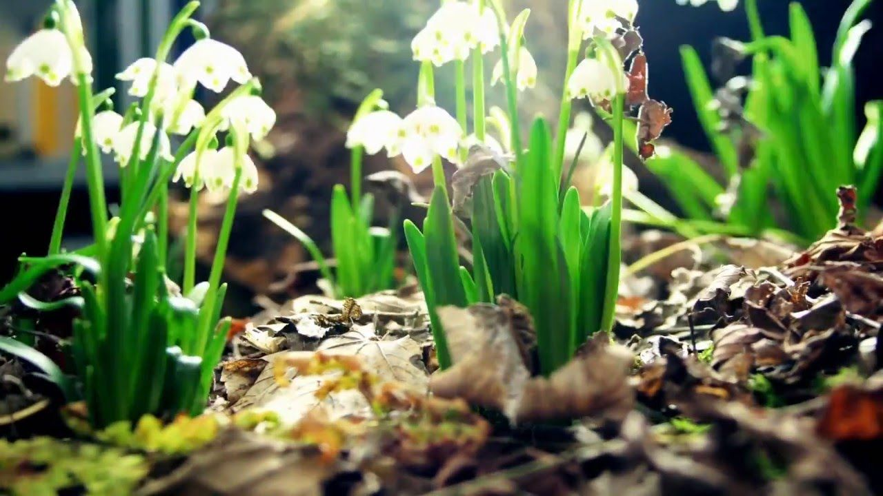 Time Lapse Flowers Growing In Seconds Full Hd 1080p With Images Amazing Nature Nature Flowers