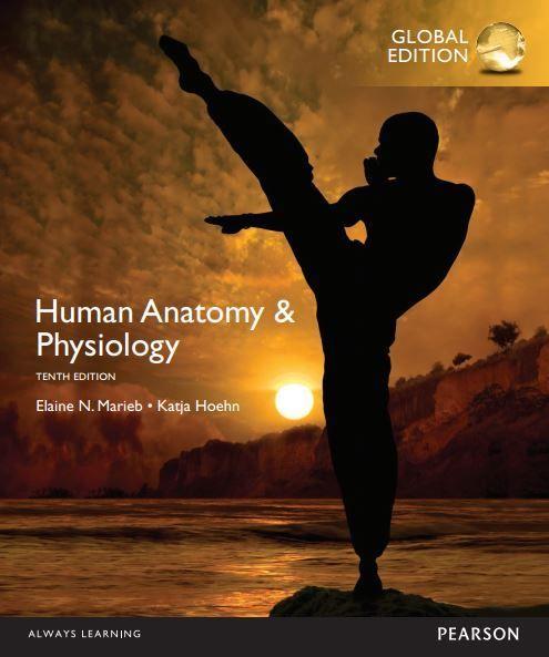 Human Anatomy and Physiology 10th edition Marieb pdf free download ...