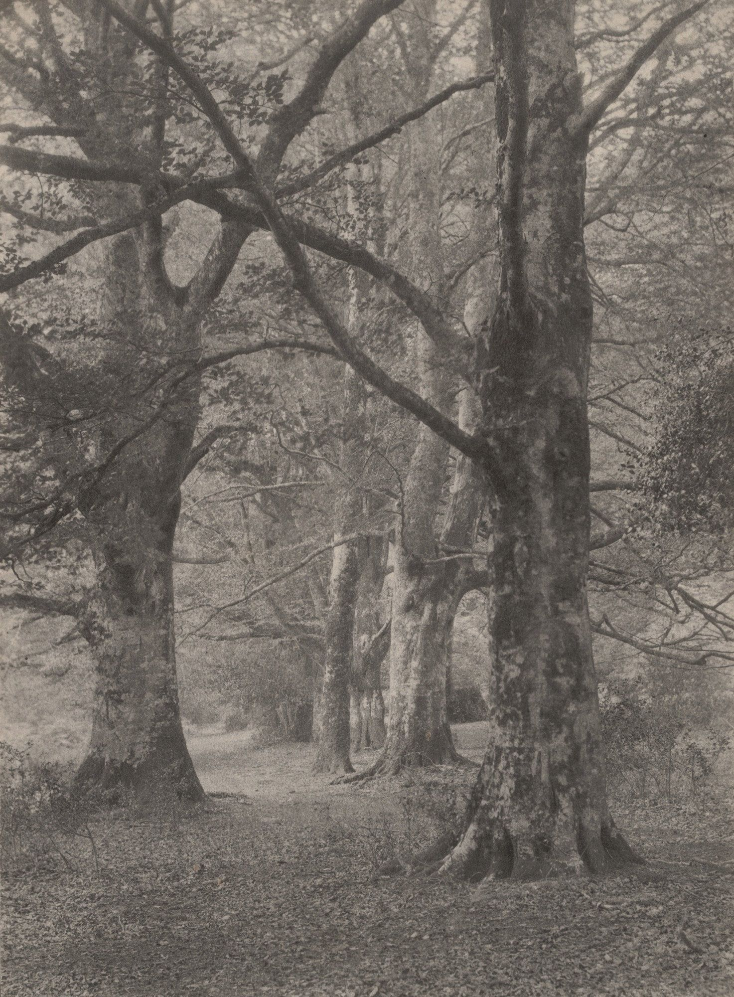 Frederick H Evans A Glade In The New Forest 1891 Landscape Photo Art New Forest