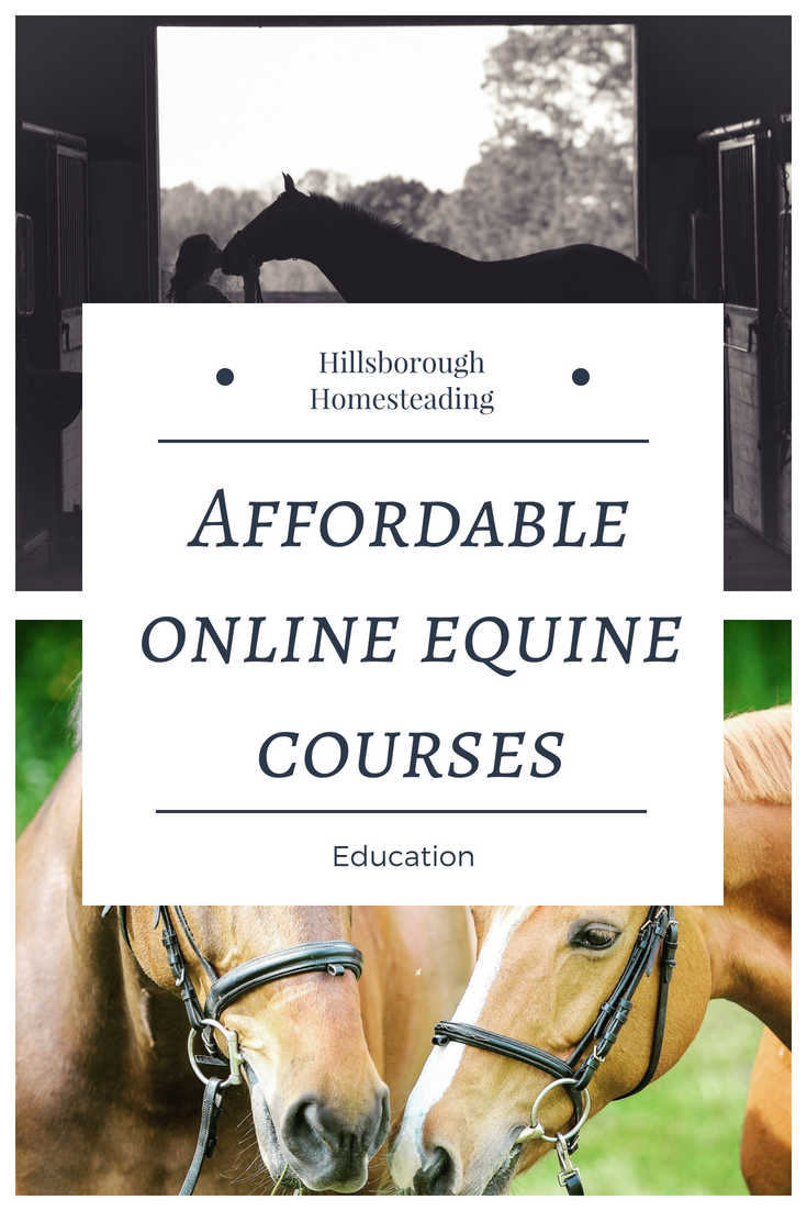 Ever Wanted To Go To College For An Equine Studies Degree But Couldn T Afford The Tuition Or Time Off Cornerstone Equine Acade Horse Health Horse Care Horses