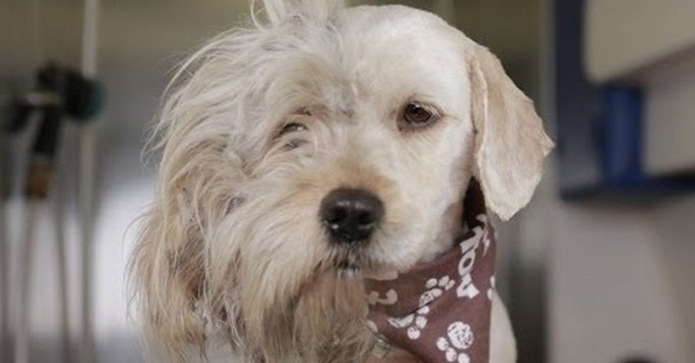 Groomer Shaves Homeless Dog. What She Found Underneath All That Hair Made My Eyes Tear Up.