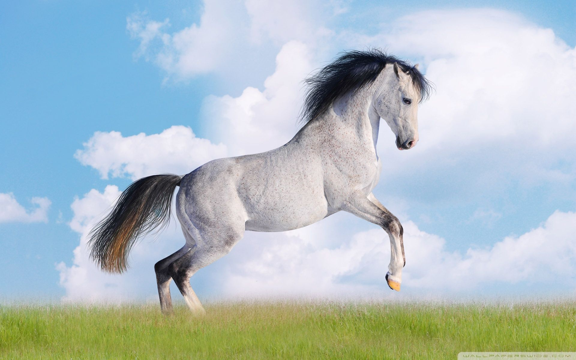 White Horse Wallpapers Horses Horse Wallpaper Horse Pictures