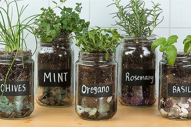 indoor herbs make an adorable herb garden with old glass jars