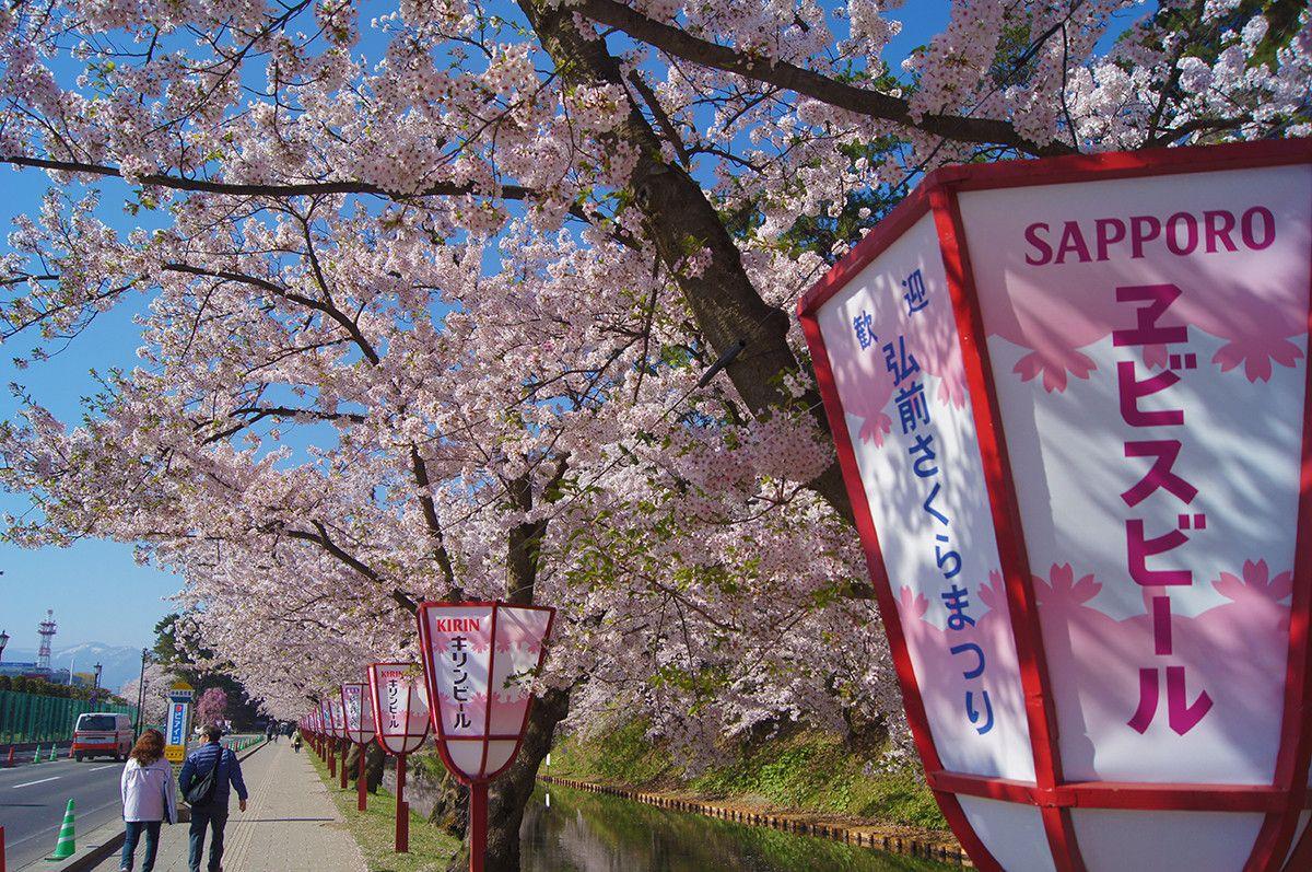 Pin By Rachel Frances On Japan Cherry Blossom Festival Cherry Blossom Blossom
