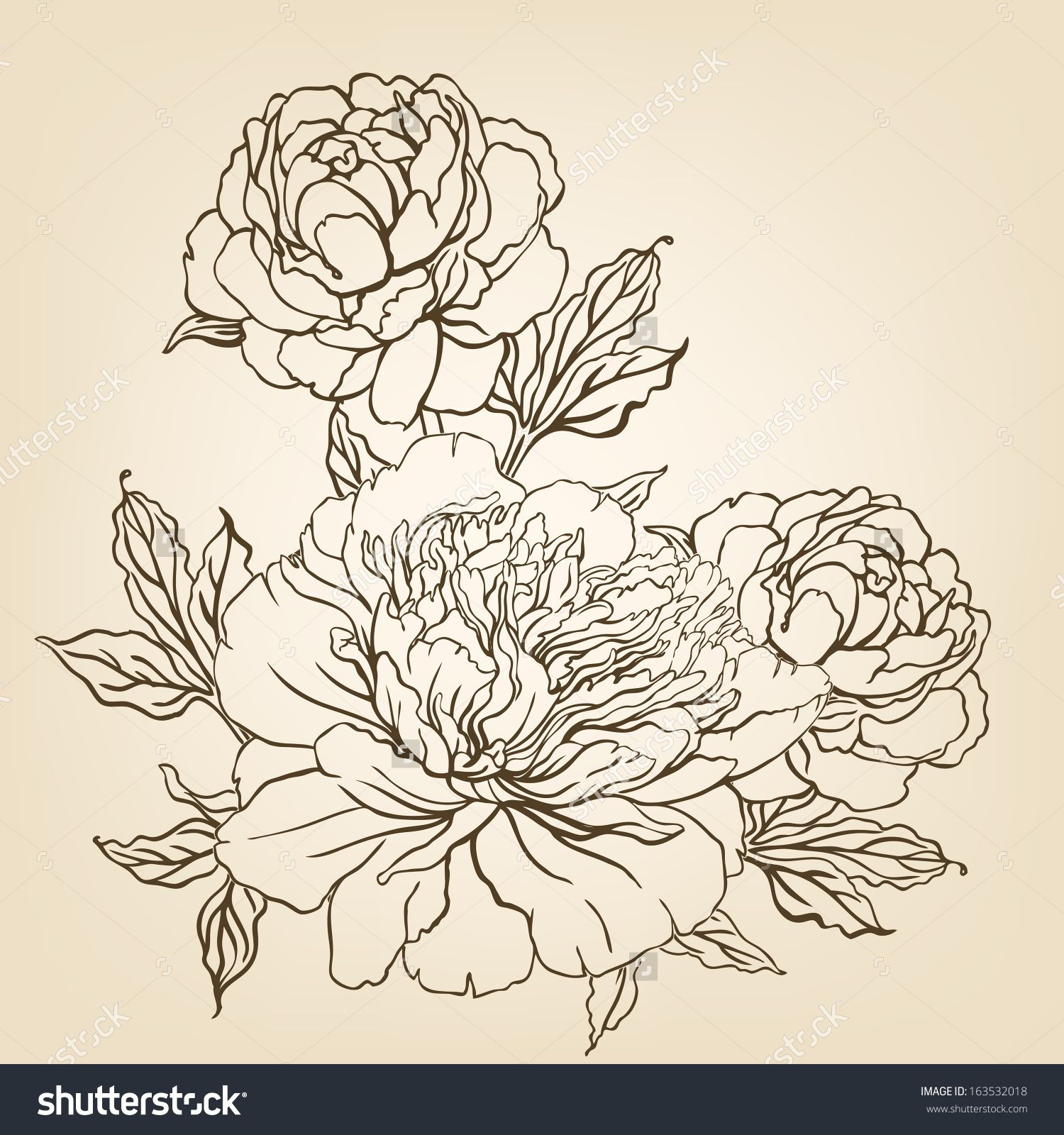 Peony Vintage Hand Drawing Background With Flowers Vector
