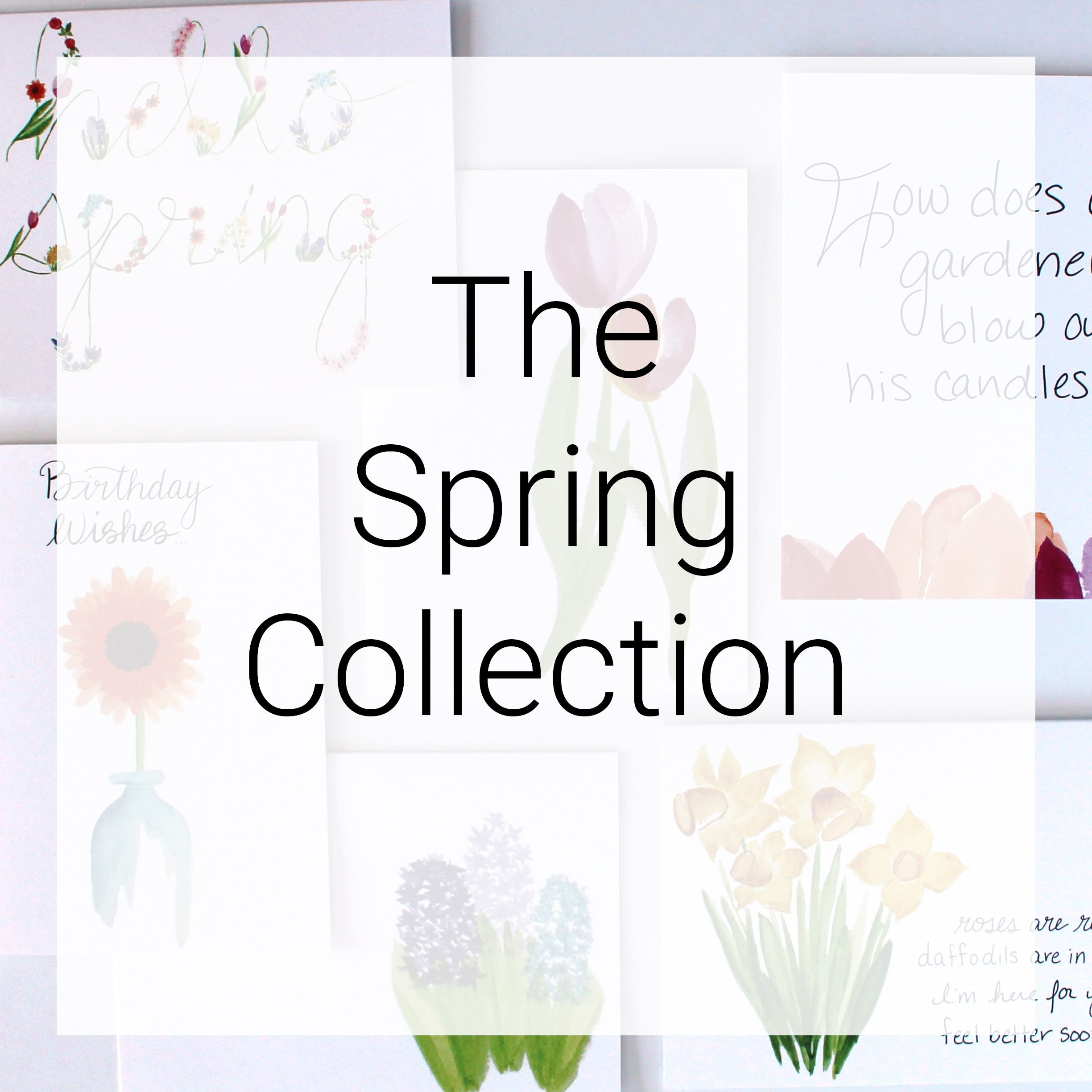 The spring greeting card collection cafe notes company