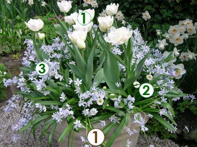 Des bulbes fleurs en pot trio champ tre sc nes de jardins jardin potager pinterest - Bulbes a planter au printemps ...