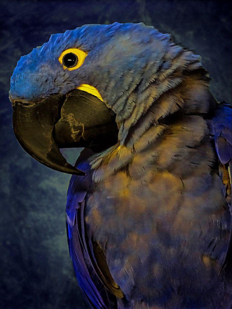 Blue Hyacinth Macaw by FotoGrazio Calgary Zoo, Alberta
