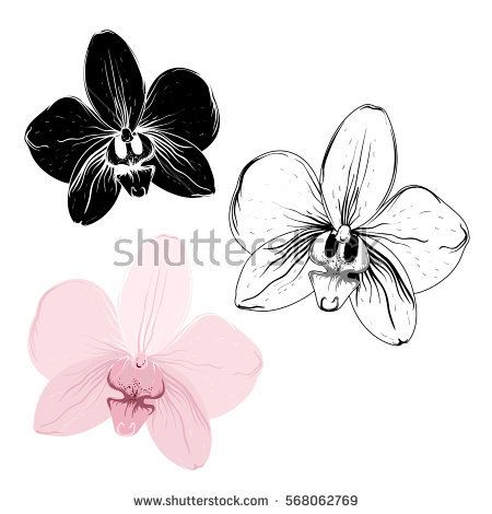 Isolated Orchid Flowers On White Background Realistic Detailed Pink And Black Outline Sketch Phalaenopsis Orchid Flower Tattoos Orchid Drawing Orchid Tattoo