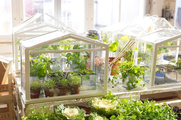 Mini serre par Ikea | Jardin Jardinage | Fairy / mini garden / terrarium