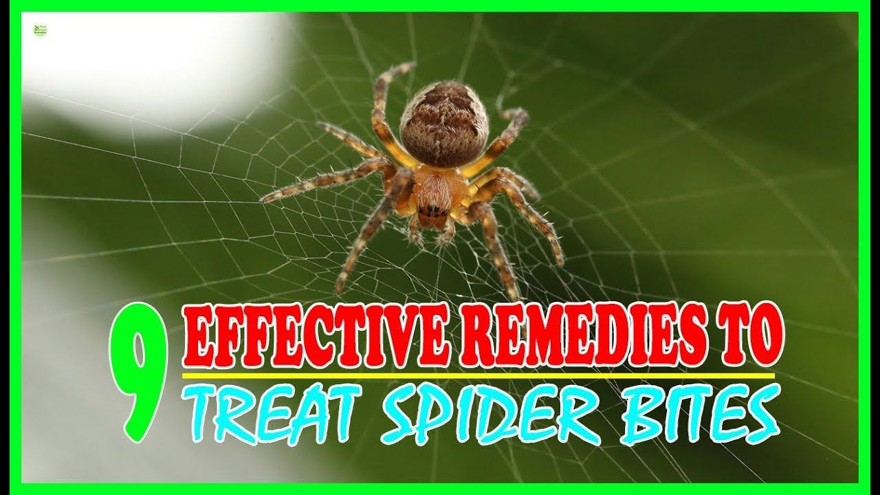 9 Effective Home Remedies To Treat Spider Bites Brown