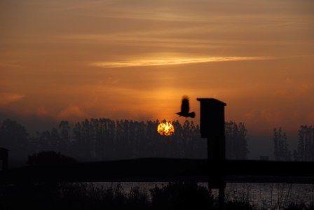 sunrise Schollenberger park