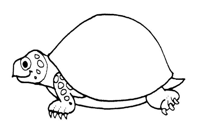 Big turtle coloring pages
