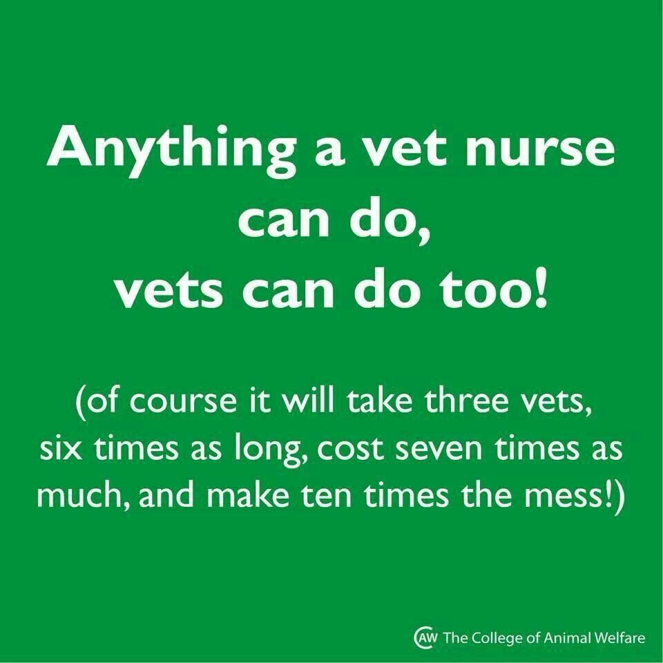 Vet Tech Quotes I Admit Itwithout A Grey Veterinary Technicianmy Side I
