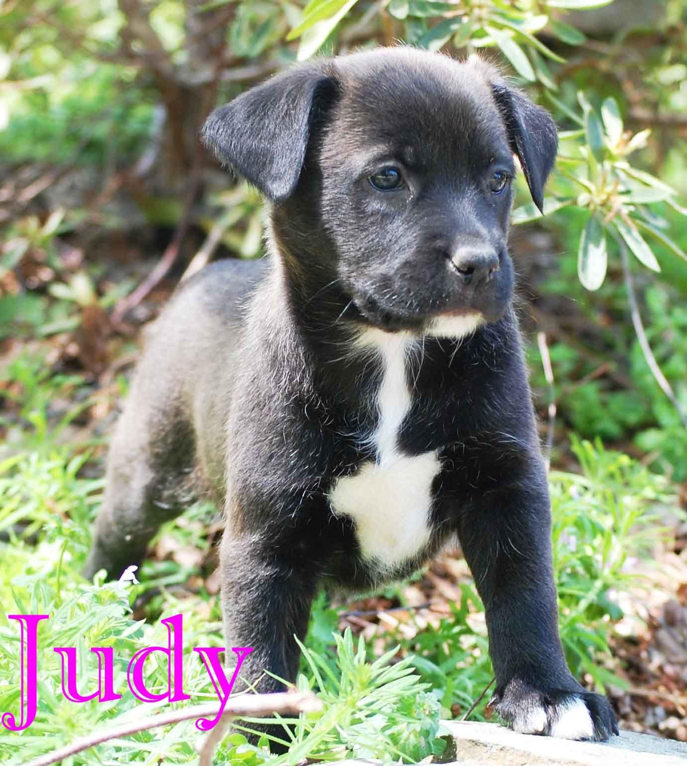 German Shepherd Dog dog for Adoption in Griffin, GA. ADN