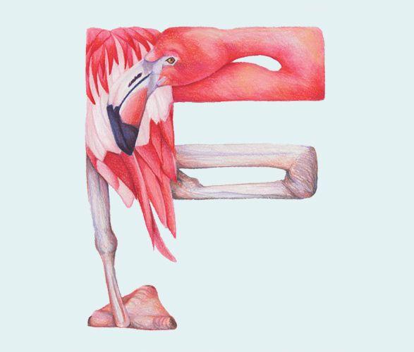 Animal Alphabet - F