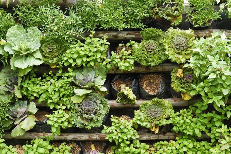 Think Vertical: Ideas for the Vertical Garden - Fresh by | Pinterest ...