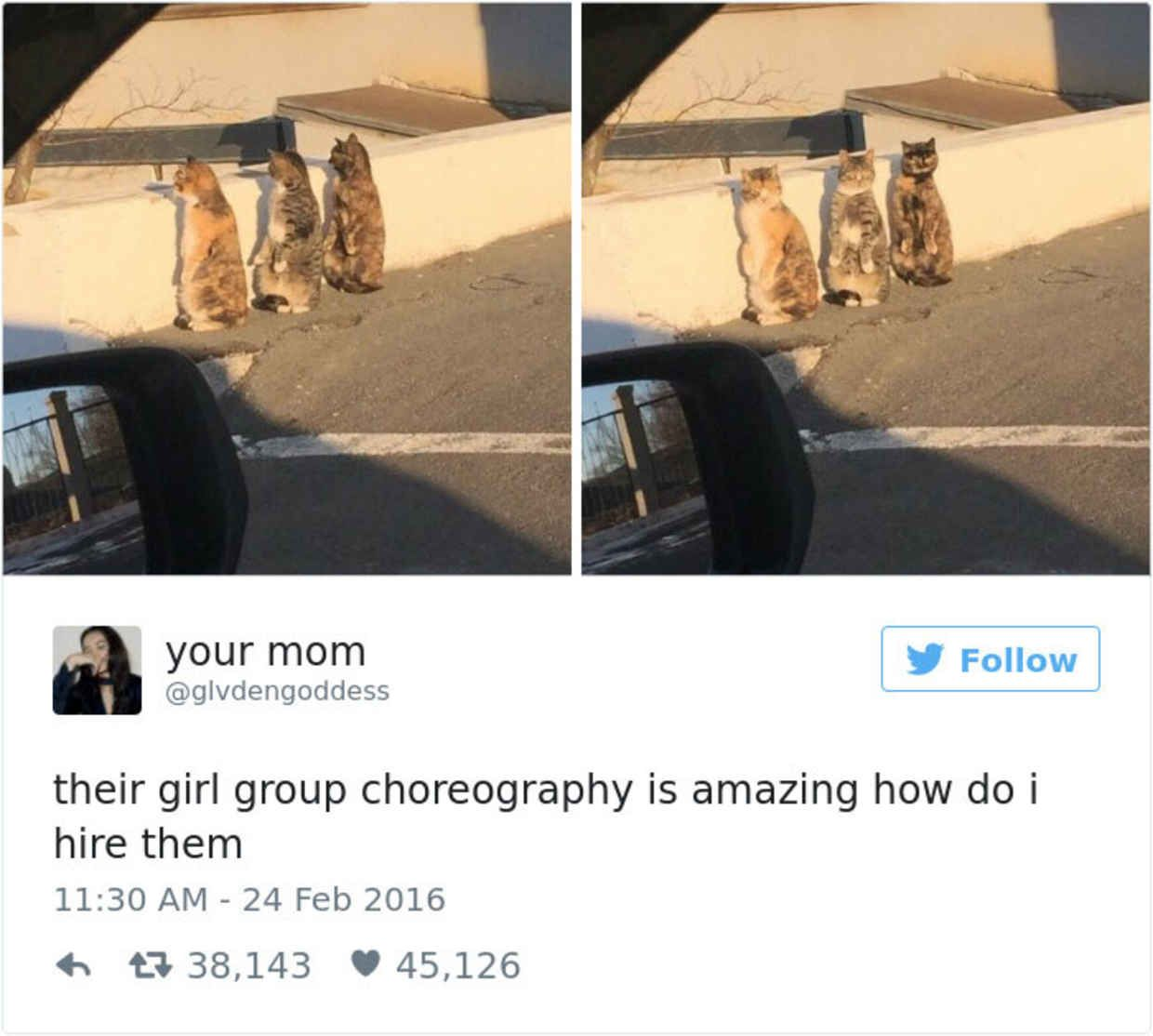 The Funniest Tweets About Cats In Funny Tweets Cat And - The 27 funniest tweets about cats in 2016