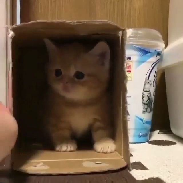 Fantastic Pics cats and kittens funny Ideas Once you carry a whole new cat into your house it is an thrilling period and for some dog owners generally