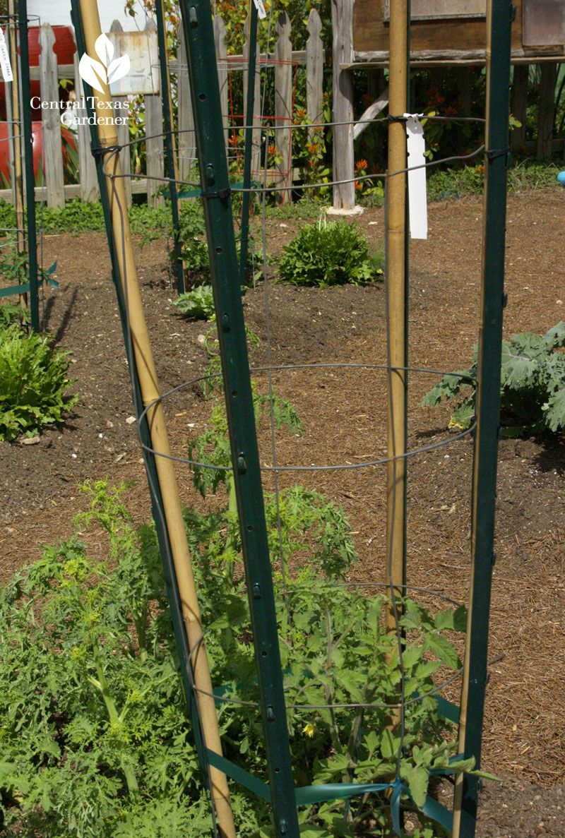 T Stake And Bamboo Tomato Stake The Natural Gardener 400 x 300