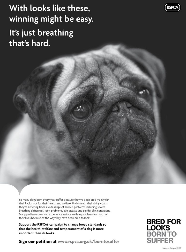 Pin By Andrea Henderson Silva On Pugs And Other Sweetness