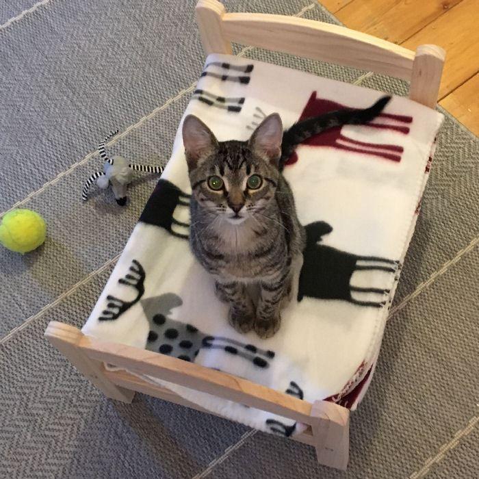 ikea hack puppenbett duktig als katzenbettchen wird sehr gern angenommen die auf dem bild. Black Bedroom Furniture Sets. Home Design Ideas