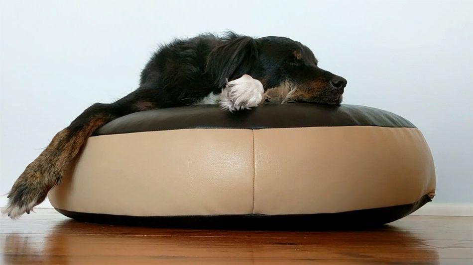 Outstanding What Makes The Best Dog Bean Bag Bliss Bean Bags Machost Co Dining Chair Design Ideas Machostcouk