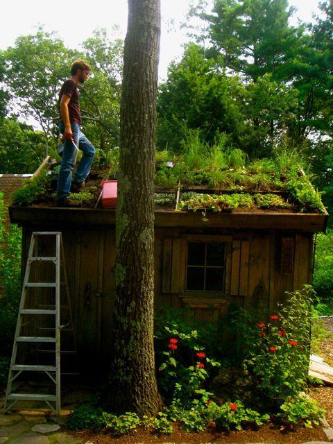 living roof via wilder potting shed living roof en socyr somos