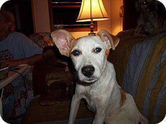 Lilly  adoptapet.com