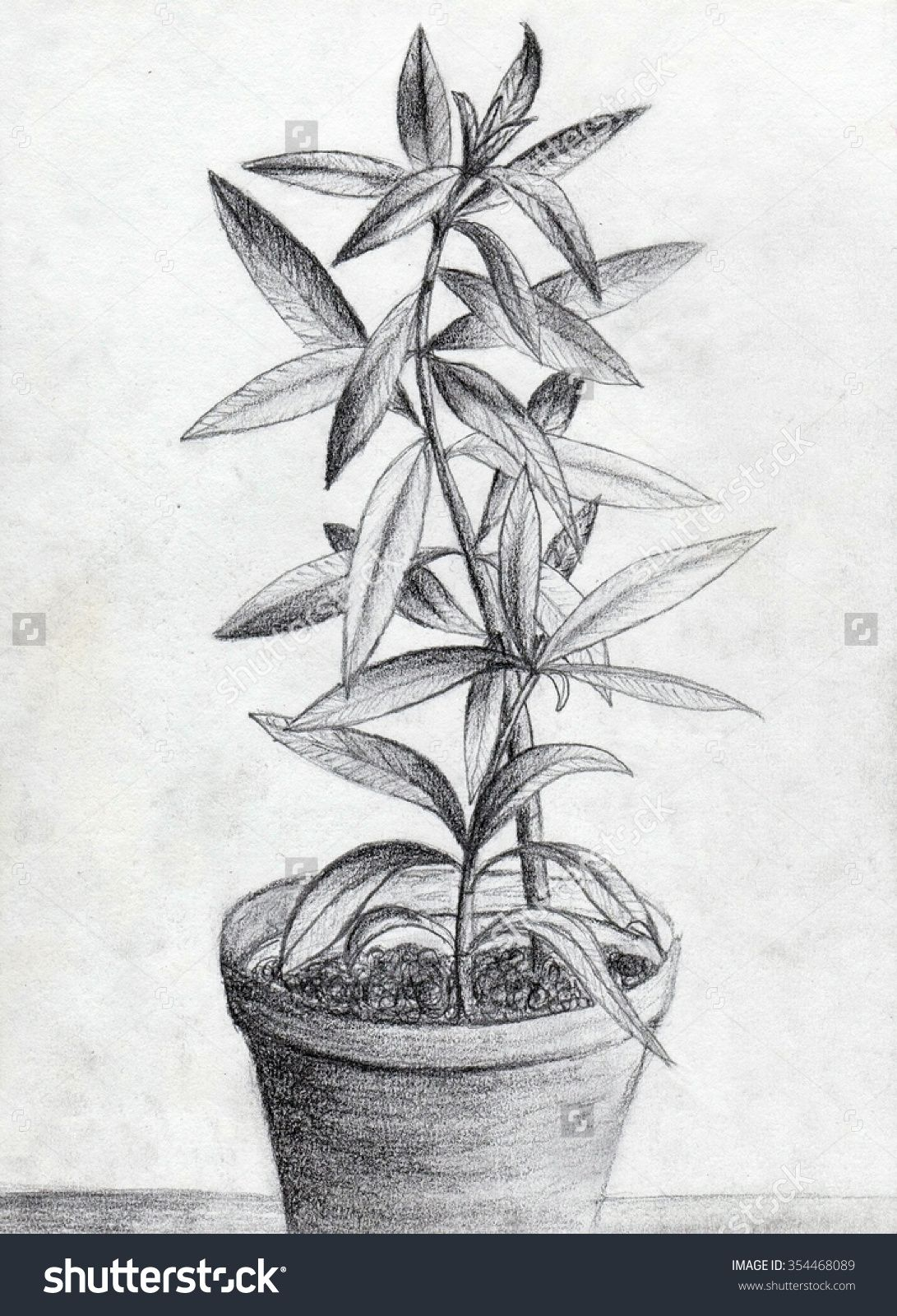 Image result for sketching plants Plant drawing, Pencil